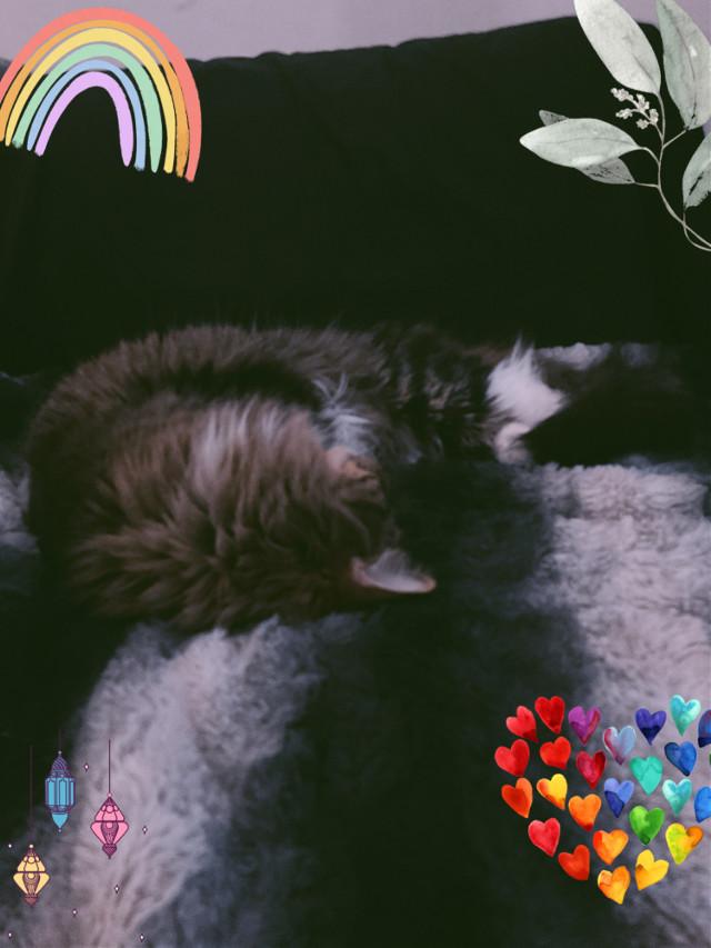 #cat #sebastian @picsart guys that is my cat isn't he adorable!
