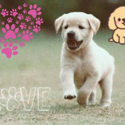 puppylover followme freetoedit