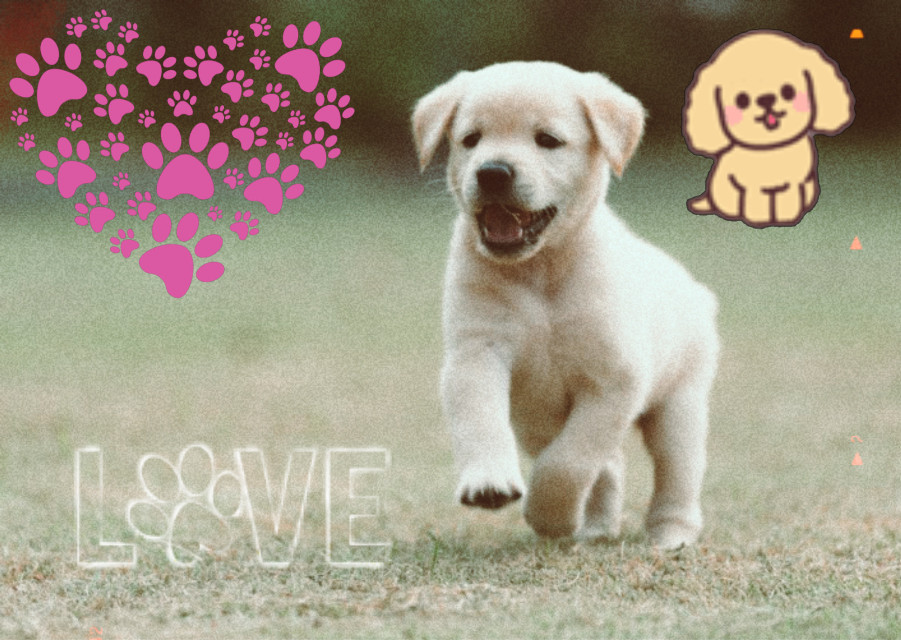 #puppylover @picsart follow me to see more pictures like this! #followme