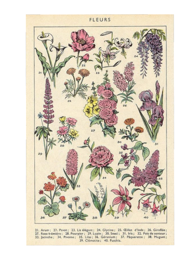 #flower #flowers #floral #art #artsy #draw #picture #aesthetic #soft #vintage #retro #old #paper #oldpaper #book #card #fairycore #cottagecore #png #natural  #garden #notes #postcard #vintageaesthetic #niche