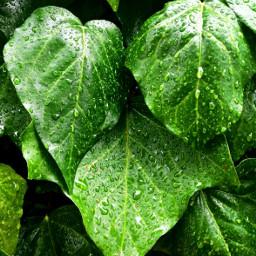 freetoedit plant nature rain
