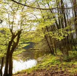 freetoedit forest river trees spring nature