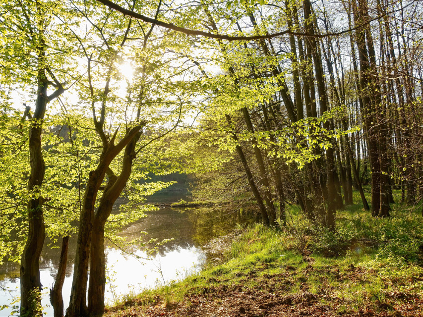 #forest #river #trees #spring #nature