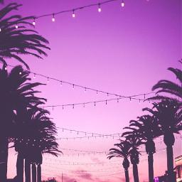 palmtrees imvustories27609 freetoedit