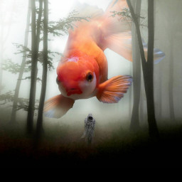 goldfish srcgoldenfish goldenfish freetoedit