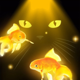 gato remixit freetoedit madewithpicsart picsart sbelias