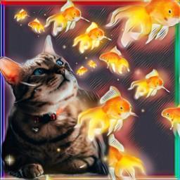 catfantasy srcgoldenfish goldenfish