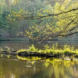 freetoedit river spring nature forest landscape