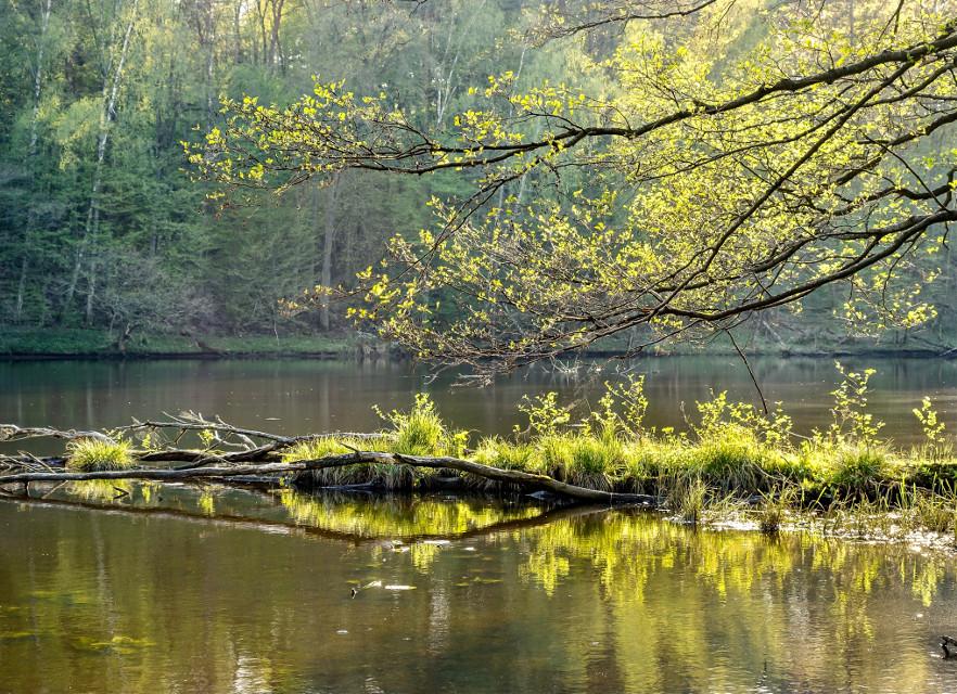 #river #spring #nature #forest #landscape