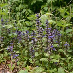nature spring may freetoedit