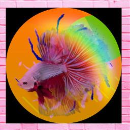 fish beta betafish jaimephene artbyjaimephene imadethis brickwall freetoedit