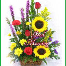 गुडमॉर्निंग मॉर्निंग सुबह morningtoall nicedaymorning morningji goodmorningji freetoedit ग म स