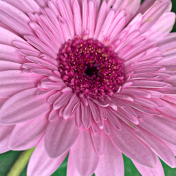 pink flower nature