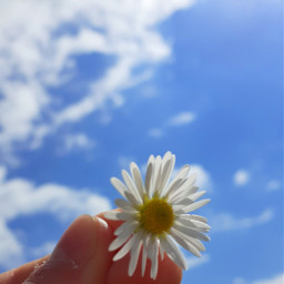 flower sky skybackground bluesky clouds aestheticflower aestheticsky niceday sunny sunnyday goodmorning spring warm happy happyday aesthetic