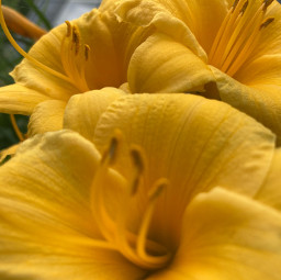 photoshoot flowerrrrss