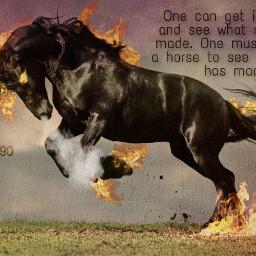yassa god not lovehorses horses love cool freetoedit
