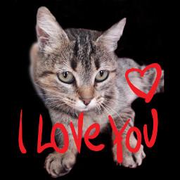 dgk cat freetoedit