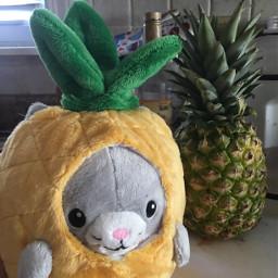pineapplekitty fromthemall