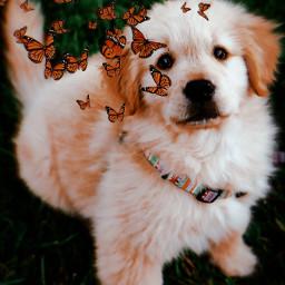 mylove dog freetoedit