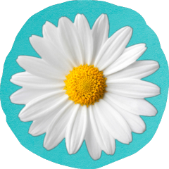 mystickers mystickeredits mystickerremix flower daisy teal aqua freetoedit