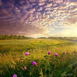 nature follow summer fanart peace remixit travel beauty pretty landscape flowers wildflowers landscapephotography freetoedit