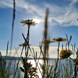 summer landscape photography flowers sky colourful