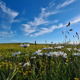 flowers sky nature clouds photography colourful