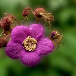 photo flower freetoedit