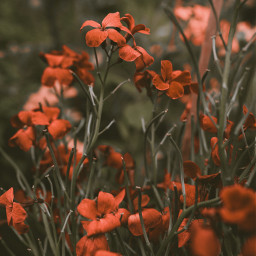 flower colorful photography naturephotography cute nature summer freetoedit