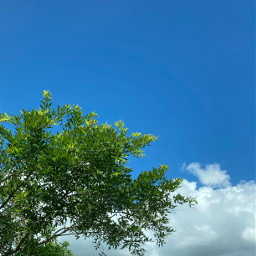 nature photography bluesky sky clouds wallpaper background backgrounds template picsart puertorico freetoedit skybackground