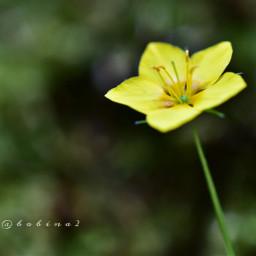 wildflower macro freetoedit