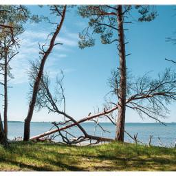 beach balticsea bodden nature travelgermany freetoedit