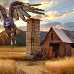 photo turkeyvulture barn country compilation freetoedit