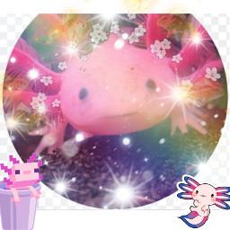 axolotl bi freetoedit
