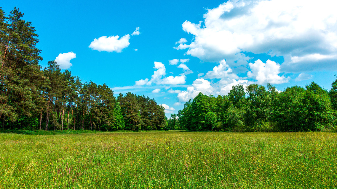 #meadow #landscape #myphotography #photography #nature