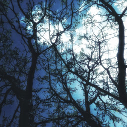 myphotography trees tree dark photography nature freetoedit