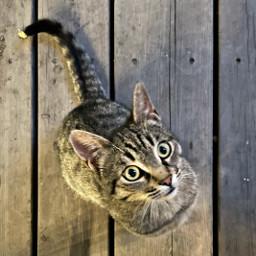 freetoedit cat wood yerevan saryan animal