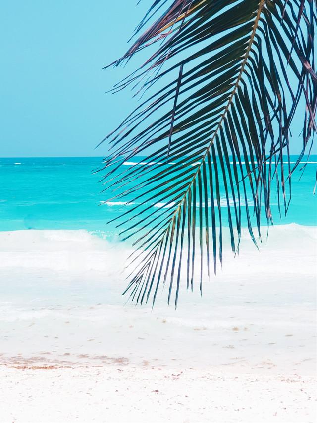 Warm Carribbean breeze.......#ocean #palmtree #breeze #leaf #waves #carribbean #tulum #mexico #escape #travel #destinations #vacay #memories #trip #myoriginalphoto #whitesand #turquoise
