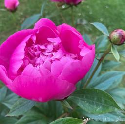 flowershoutout simple flower garden photography orient_photos