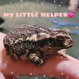 pet petsofpicsart pets toad toads toadsarecool toadlife exotic exoticpet exoticpets bored 2am gettoknowme freetoedit