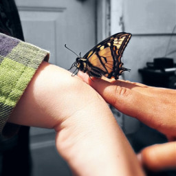 butterfly friends natureshero hands love special flyers freetoedit