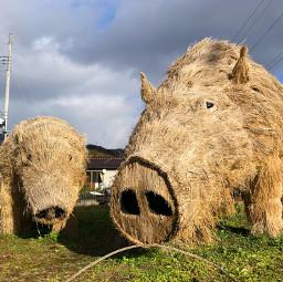 sculpture art boar animal strawart japan pcmyfavoriteshot myfavoriteshot