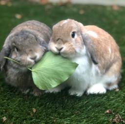 bunnybff pcmyfavoriteshot myfavoriteshot
