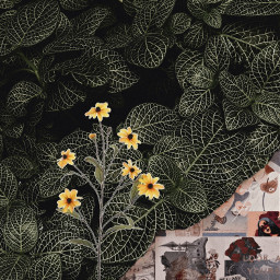 flowers retro colage freetoedit