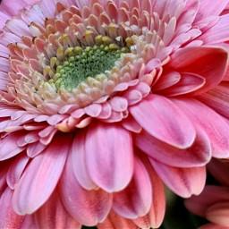 pinkflower pink summervibes