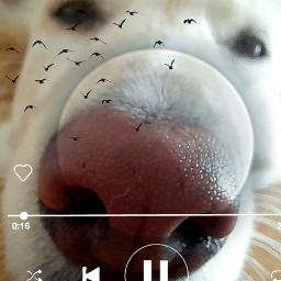 doggypiggy freetoedit