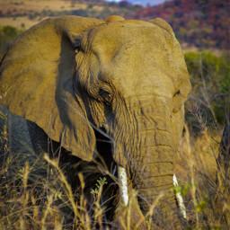 elephant naturephotography