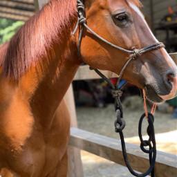 dd horse cute