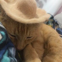 tiktok cat fure hat cute kitty