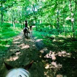 horses fun woods trails friends